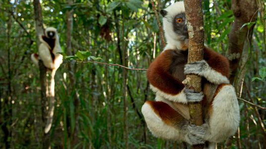 En Madagascar, la falta de turismo podría propiciar otra crisis