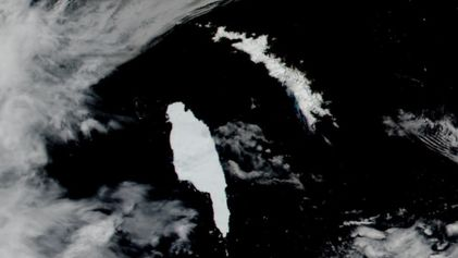 El iceberg más grande del mundo se dirige hacia Georgia del Sur y hacia su fauna