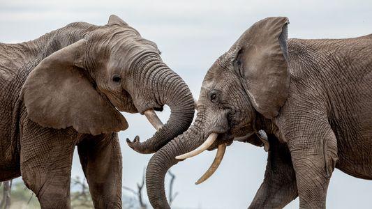 El futuro de los safaris africanos (2)