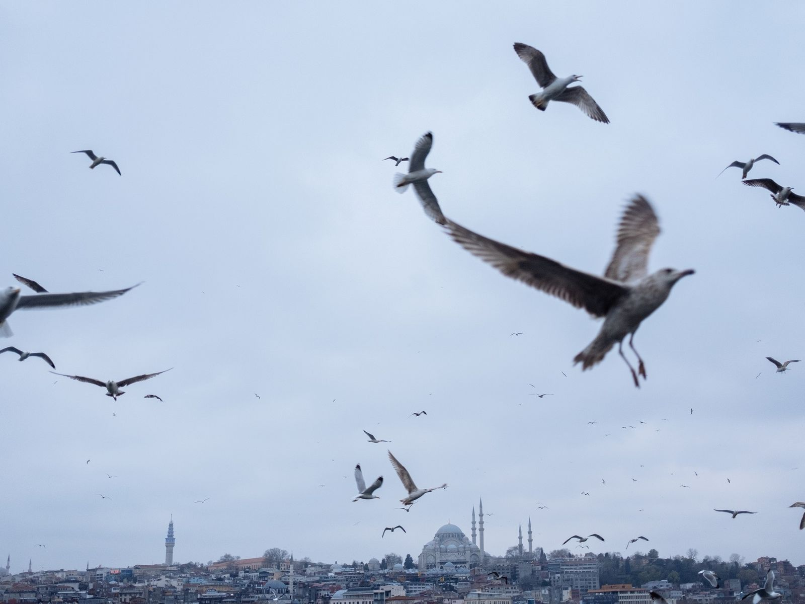 Gaviotas sobrevuelan Estambul