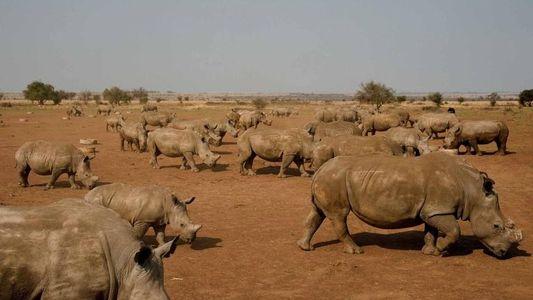 Sudáfrica legaliza de nuevo la venta de cuernos de rinoceronte