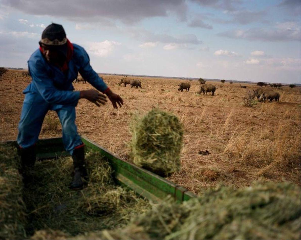 Un trabajador echa alfalfa