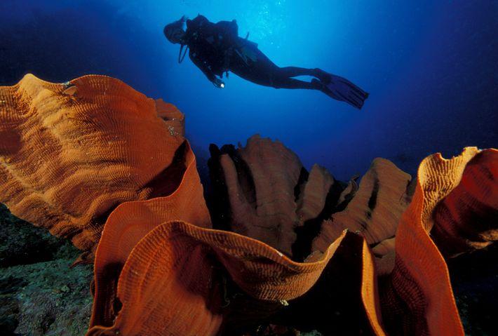 Fotografía de un submarinista