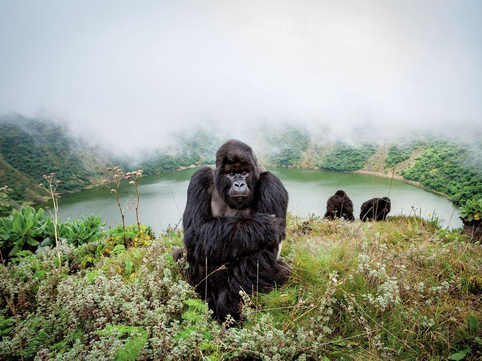 Este es el futuro de los safaris en África