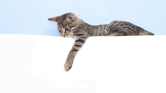 Cómo saber si tu gato es zurdo o diestro