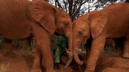 El cáncer apenas afecta a los elefantes. ¿Por qué?