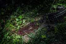 Caza furtiva de aligátores