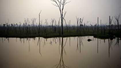 Varias especies de peces amazónicos correrán peligro si el fuego destruye los hábitats fluviales