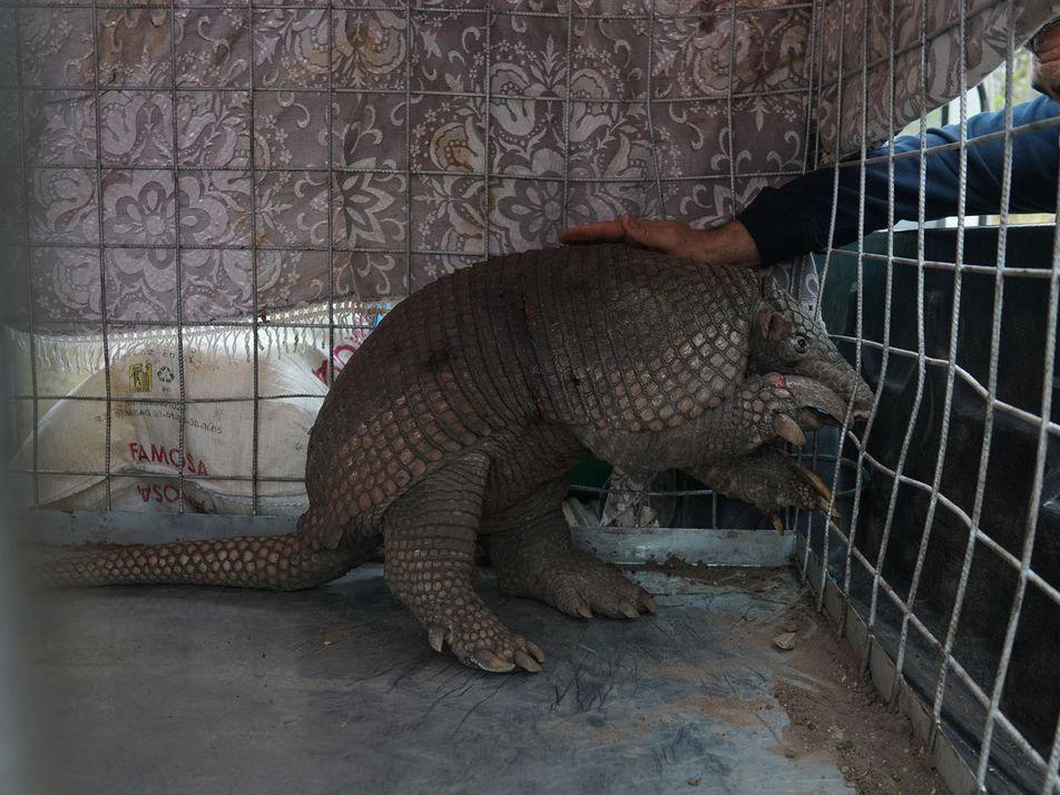 Así rescatan y ayudan a los animales afectados por los incendios de la Amazonia