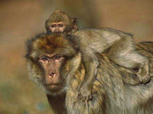 Este Día del Padre, conoce a seis padres extremos del reino animal