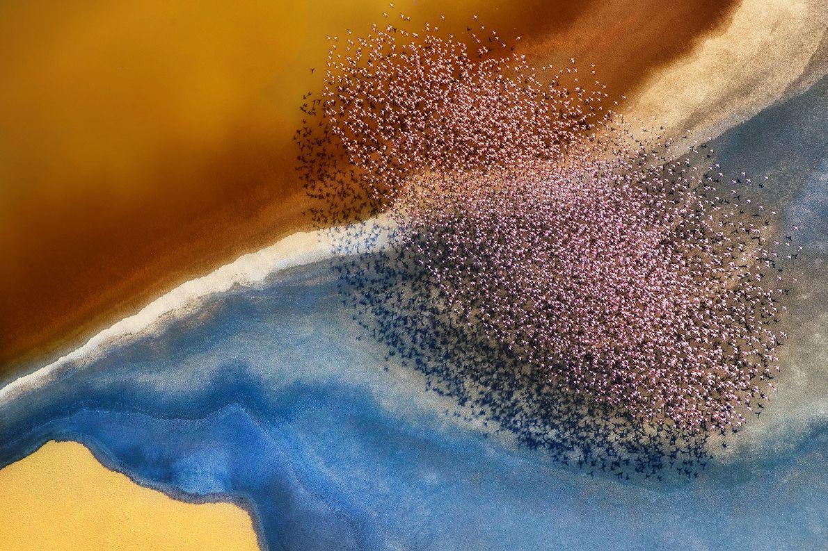 Flamencos. Lago Natron, Tanzania