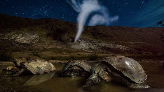 Estas fotos revelan el mundo nocturno de los animales