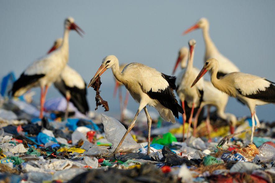 ¿Por qué consumen plástico los animales marinos?