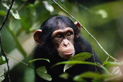 Estos animales también practican el distanciamiento social para no enfermar