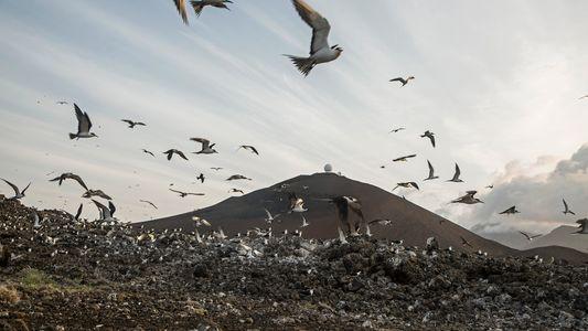 La mayor área marina protegida del Atlántico pronto será oficial