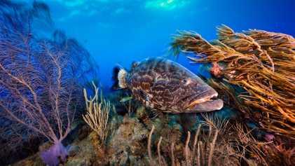 Este país está restaurando y protegiendo su océano