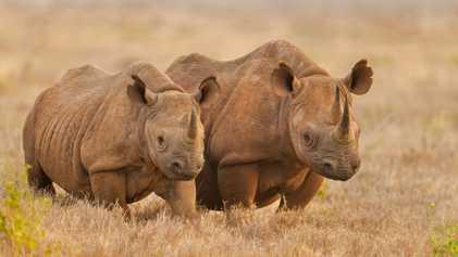 ¿Cuáles son los Cinco Grandes de África? Conoce a la fauna más icónica del continente