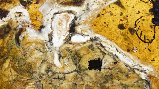 Descubiertos en ámbar los restos de un ave de la era de los dinosaurios