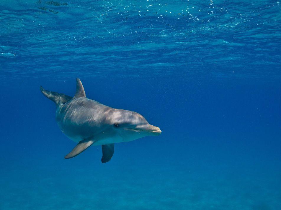 Los delfines de Florida están expuestos a compuestos químicos de plásticos