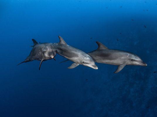 Los delfines salvajes tienen personalidad propia, como los humanos