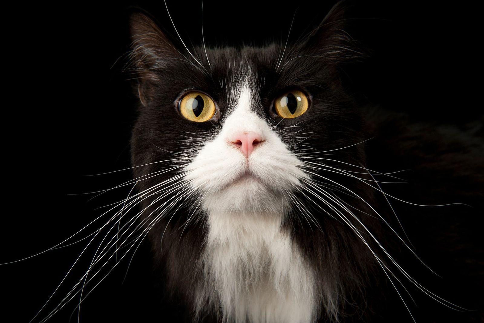 Las colas de los gatos