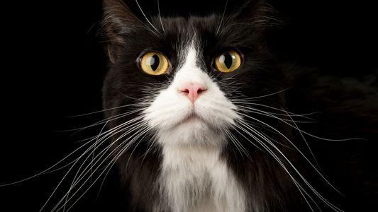 Qué dice tu gato con su cola y otras claves para entender la comunicación felina