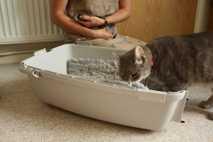 Un gato entra en un transportín