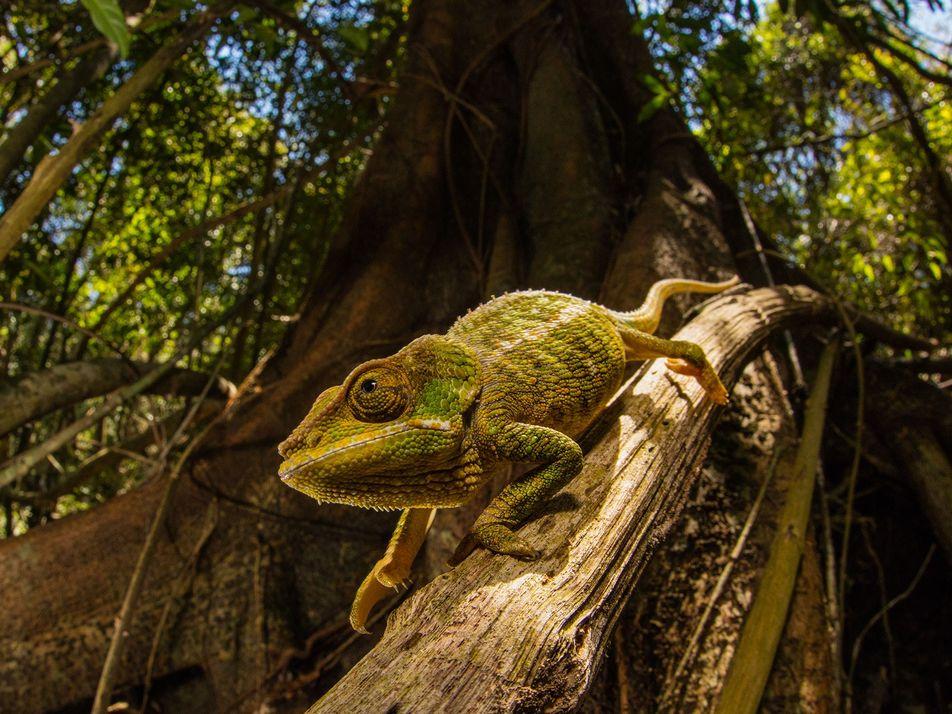 Esta nueva piel «inteligente» cambia de color y está inspirada en los camaleones