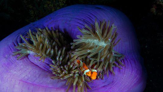 Los huevos de este pez no eclosionan por culpa de la contaminación lumínica
