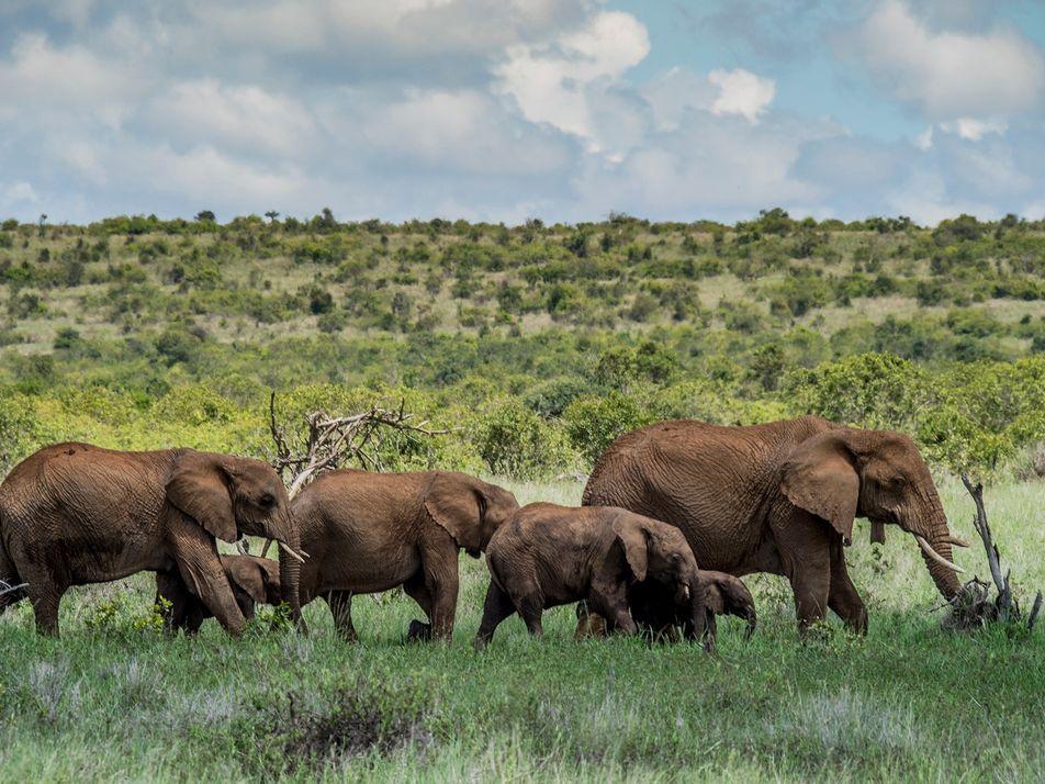 Con la suspensión de los safaris por la COVID-19, surge la amenaza de la caza furtiva
