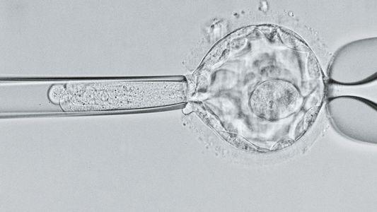 Los primeros bebés editados genéticamente podrían correr peligro de muerte temprana