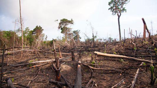 La deforestación da lugar a más enfermedades infecciosas en humanos