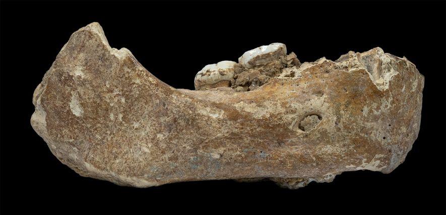La mandíbula hallada, conocida como mandíbula de Xiahe por el condado chino donde se descubrió, representa ...