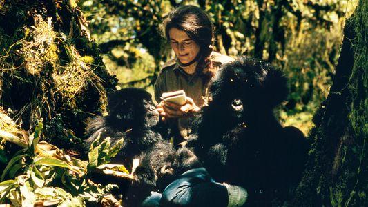 Dian Fossey, la científica que nos enseñó a amar a los gorilas