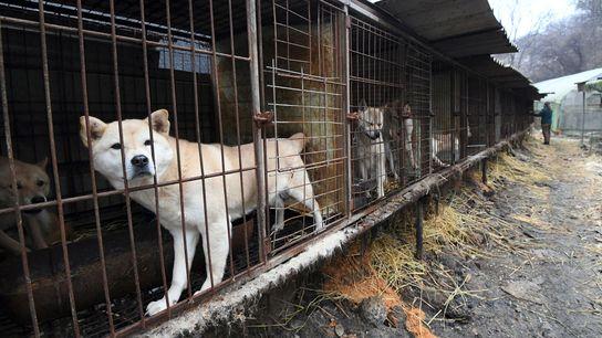 Perros en jaulas