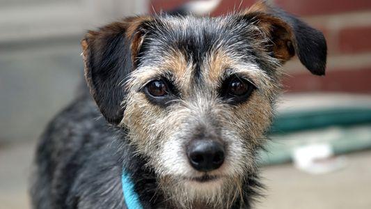 Los perros pueden ser «sistemas de alerta temprana» para la exposición a sustancias químicas tóxicas en ...