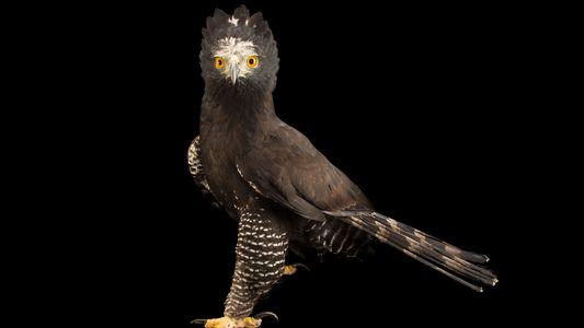 Te mostramos 19 especies de águila que quizá no conozcas