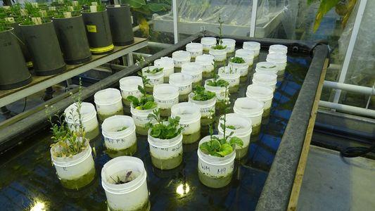 Las lombrices son capaces de reproducirse en tierra marciana simulada