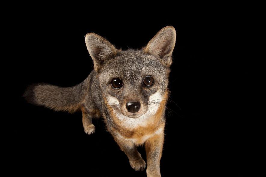 Animales protegidos por la Ley de Especies en peligro de extinción de EE.UU.