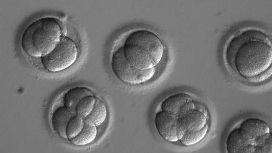 Por primera vez, investigadores en Estados Unidos editan genéticamente embriones humanos