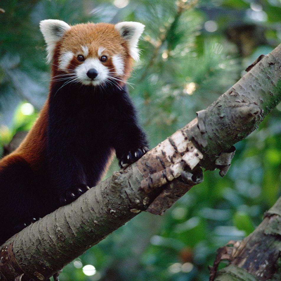 Que no te engañen las redes sociales: los animales salvajes son mascotas terribles