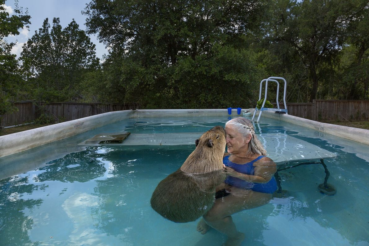 After her first capybara died of liver failure, Melanie Typaldos bought Garibaldi Rous. The Texan was ...