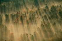 Bosque cubierto de niebla