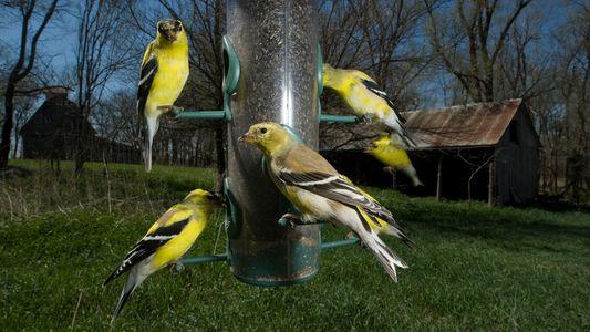 Por qué no debes alimentar a animales salvajes (salvo, quizá, a aves)