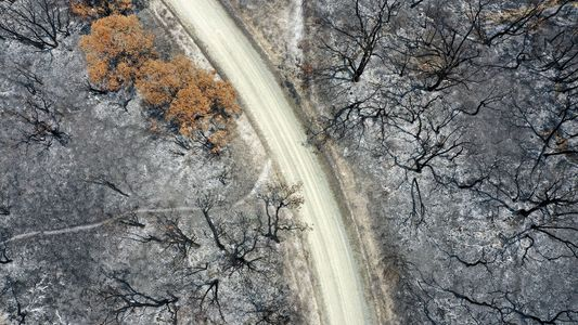 Ante la drástica extensión de los incendios forestales, puede que algunos bosques no se recuperen