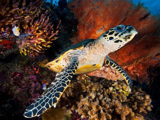 El comercio de productos de tortugas marinas está prohibido, pero aún se venden en Japón