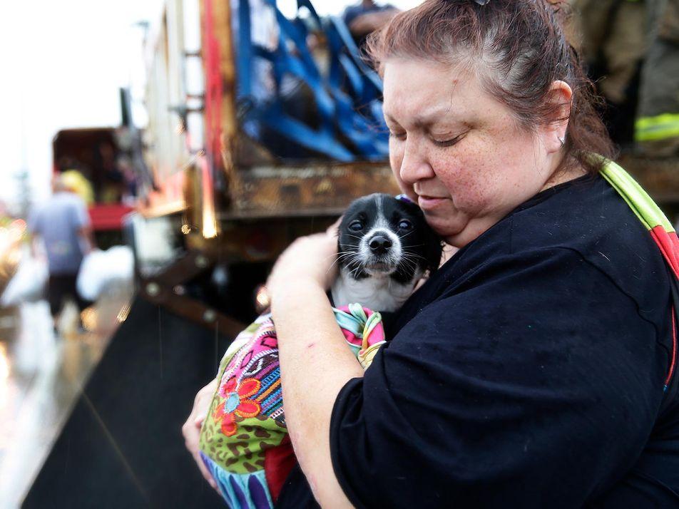 Mascotas rescatadas de las inundaciones del huracán Harvey