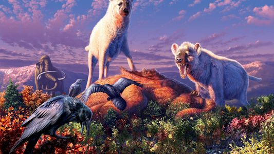 Las hienas vagaron por el Ártico, según revelan sus fósiles