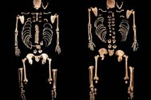 Esqueletos de cazadores-recolectores