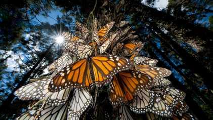¿Por qué se están desplomando las poblaciones de insectos?